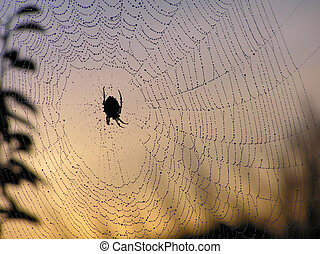 Spider web at twilight