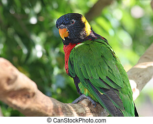 Rainbow Lorikeet In Tree - A colorful rainbow lorikeet...