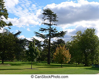 Trees in Kew Gardens - In the Botanical Garden of London,...