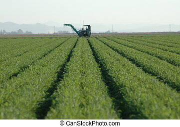Crop Rows and Farm - Rows of farm crops with farm machinery...