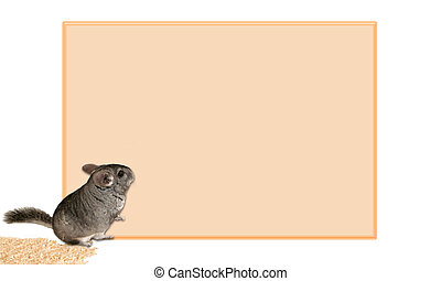 chinchilla sign (blank for printing)