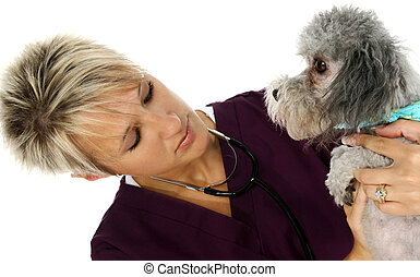 Veterinarian With Dog - Female veterinarian with dog