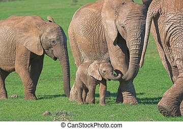 Motherly affection - Mother Elephant showing affections...