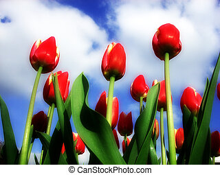 Tulip 14 - This is a Tulip