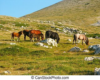 Wild Horses - Wild horses resting on a hill