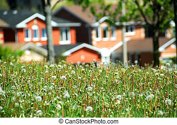 Residential street - Houses on residential street, spring...