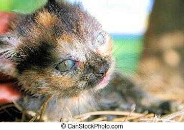 Calico - multi-colored cat