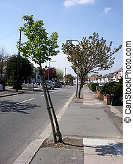 Bent tree - This is a slightly bent tree in Clayhall Ilford.