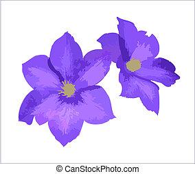 Purple Flowers - Purple Clematis flower pair