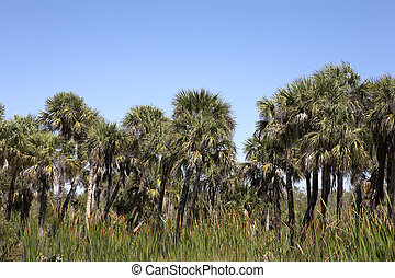 palm tree line view across the J N Darling national wildlife...