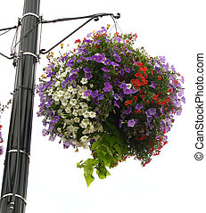 planter - flower filled planter isolated