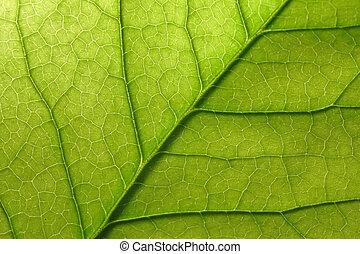 Leaf macro - Leaf detail