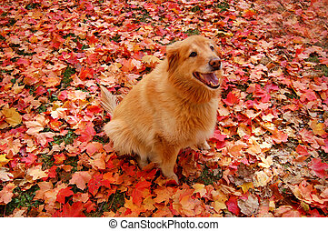 Camoflauge Dog - dog in brightly colored autumn leaves