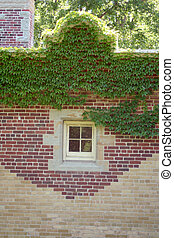 small window on side of building with ivy climbing the wall