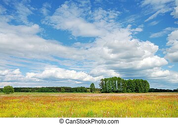 Spring Landscape - Meadow, trees and blue sky