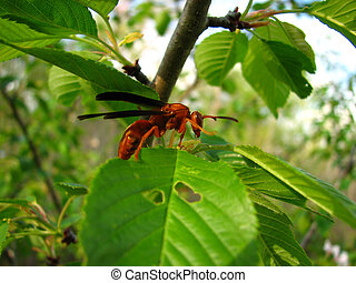 red wasp on a leaf