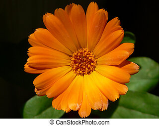flower - beautiful orange flower