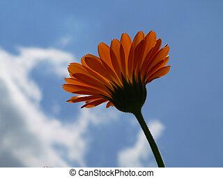 flower - beautiful orange flower