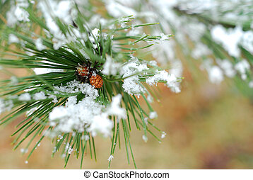 Snowy pine branch - Snowy branch of pine with needles...