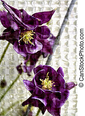 Stock Photo of Purple Columbine - Abstract photo purple...