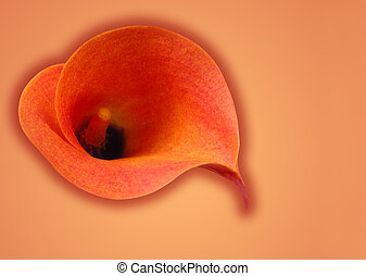 Orange symphony - Orange color abstract with Calla flower...