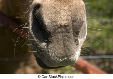 Horse Nose - The nose of a pony