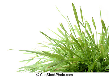 Grass on White - Natural grass against white background