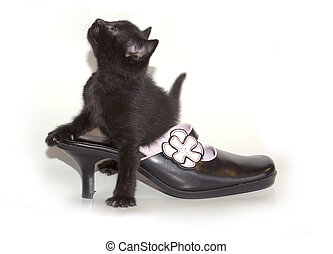 chaton, chaussure