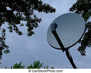 Satellite dish surrounded  by trees