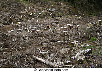 tree stumps in forest