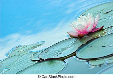Lily Pond - Lily pond