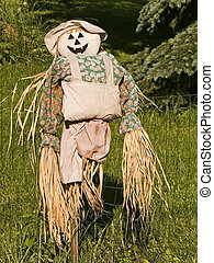 Scarecrow - A scarecrow with a pumpkin face