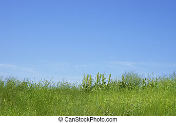 summer time - green field in the summer