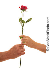 Male and Female hold a Single Red Rose of Devotion - Two...