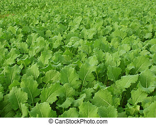 Turnips as a background