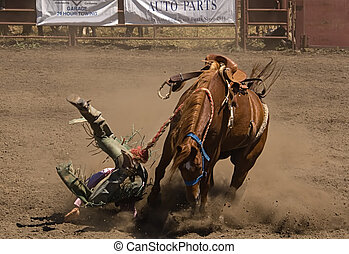 Bronc Rider Takes a Fall - Bronc rider falls at 2006 Russian...