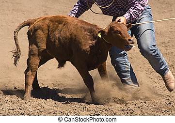 Roped calf at 2006 Russian River Rodeo, Duncans Mills,...