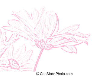 Pink Shasta Daisy Illustration - a pink chalk illustration...