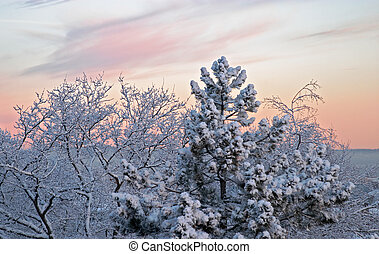 winter morning - Cold winter morning, dawn: white frozen...