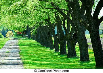 綠色, 車道, 樹