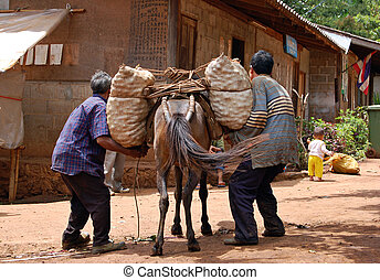 Pack animals - Farmers removing a fruit load from a mule in...