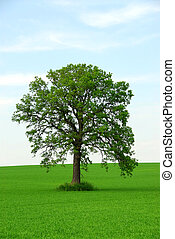Single tree in summer