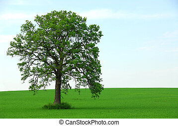 Single tree summer - Single tree in summer horizontal
