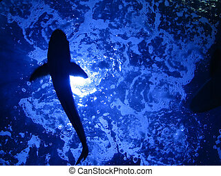 Fish\\\'s Silhouette in a museum