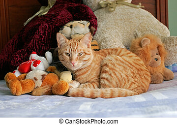Cat and teddy bears - Cuddly ginger cat lying between teddy...