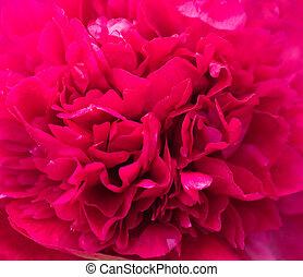 Spring flower. Macro view