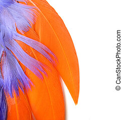 Colorful feathers closeup, space for text