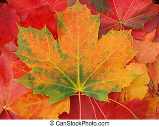 Autumn leaves as a background