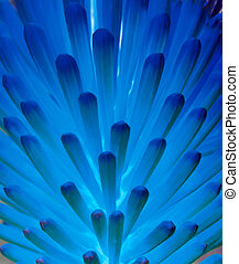 Blue flower - An inverted hot poker flower showing a variety...