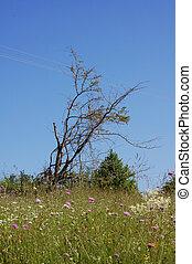 Lone tree - Lonely dead tree in green field